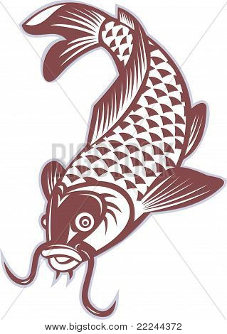 Koi Carp Swimming Down