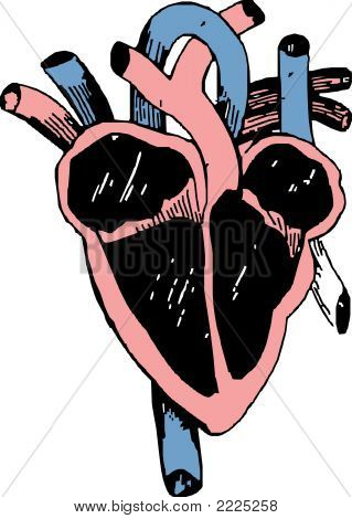 Heart Section