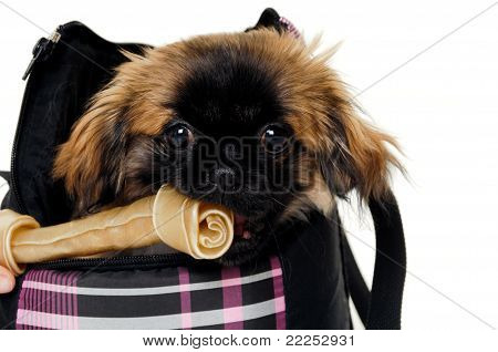 Puppy Eating Bone
