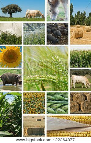 Ackerbau und Viehzucht.