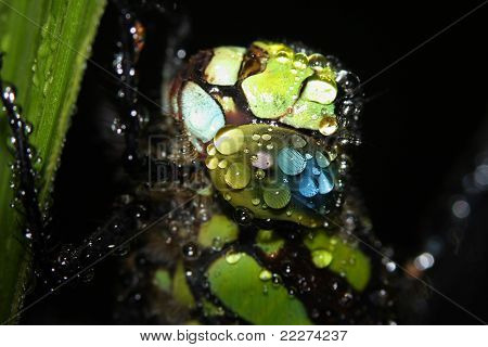 dragonfly - head in raindrops