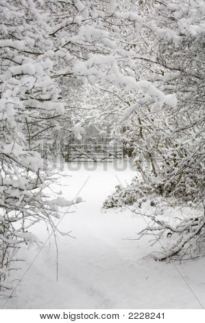 Trees And Gate In Snow