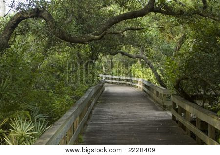 Boardwalk In Nature Trail