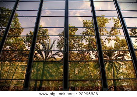 reflexión plams