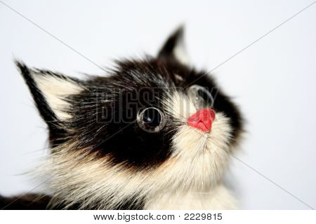 Staring Cat2