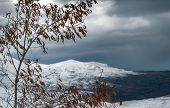 Winter landscape in overcast weather, view on the gray sky and snowy mountains through the old dry t poster