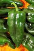 stock photo of poblano  - Poblano chili peppers chile Capsicum annuum - JPG