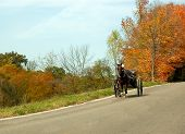 image of mennonite  - an amish man driving his horse and buggy - JPG