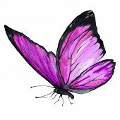 Watercolor Image Of A Butterfly On A White Background. poster