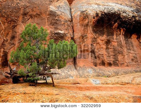 Brush bush and sandstone in Arches National Park
