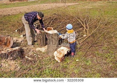 Woodcutter Cutting Broken Tree