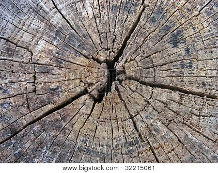 Old Cracked Tree Stump Wood Texture Background