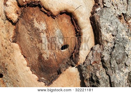 Abstract heart on a tree