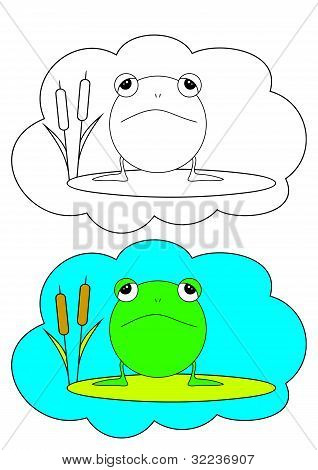 The Picture For Coloring. Frog.