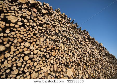 Spruce Timber Logs