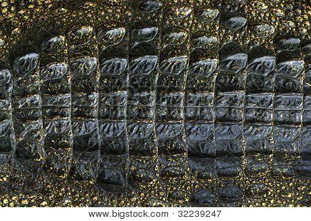 crocodile skins