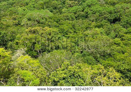 Selva de Belice
