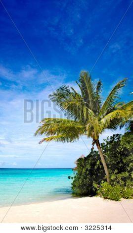 Palm Tree In A Tropical Beach