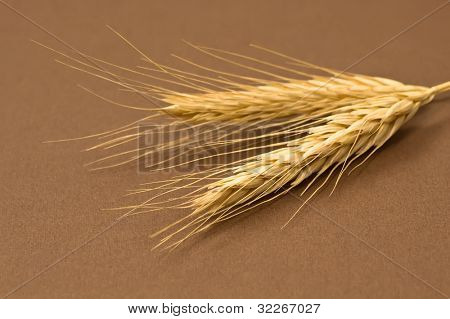 Dried rye on brown texture background