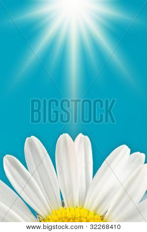 Marguerite petals on blue sky background with sun