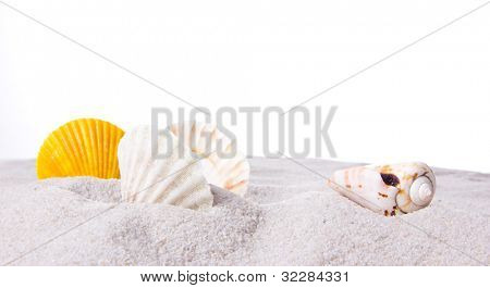 Shells on sand over white background
