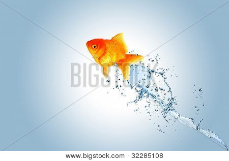 Jumping fish out of water, concept of challenge