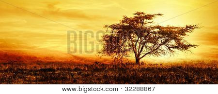 Big African tree silhouette over sunset, single tree on the field, beautiful panoramic image of nature at Africa, summer evening peaceful landscape of Masai Mara