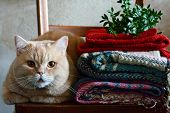Ginger Cat In A Cozy Warm Interior. Autumn-winter Period. Autumnal Cozy Mood Concept. Home Interior, poster