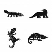Vector Design Of Zoo And Environment Symbol. Set Of Zoo And Reptile Vector Icon For Stock. poster