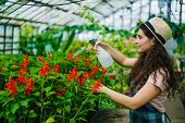 Cheerful Female Farmer Spraying Blooming Flowers With Spray Bottle In Greenhouse Working Alone Smili poster