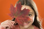 Instead Of Sugar. Ingredient In Baking And Sweetener. Maple Syrup. Little Child Hold Maple Leaf. Sma poster