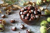 Chestnuts. Buckeyes. Autumn Mood. Leaves Of A Chestnut Tree. poster