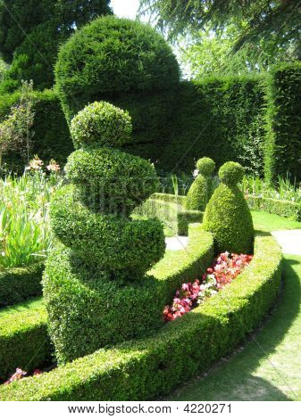 Topiary. Box. Hedge. Trees. Shape. Garden Art