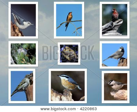 Tiny Bird Collage