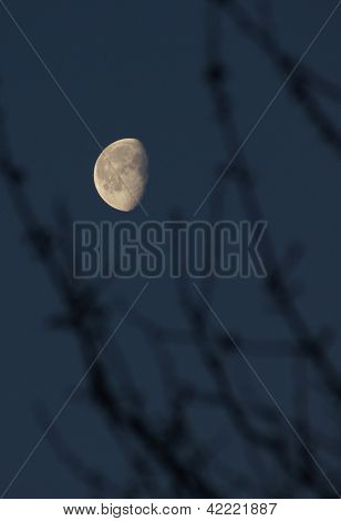 Moon on a background sky