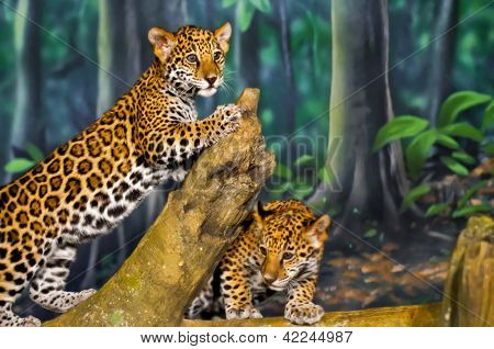 Cachorros de Jaguar