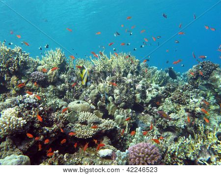 coral reef with hard and fire coral and exotic fishes at the botto of tropical sea