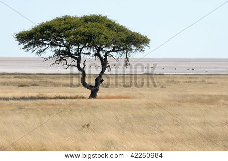 Lonely Tree Landscape