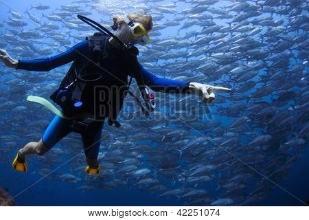 Underwater shoot of a young lady diving with scuba in a clear sea and pointing to something more interesting than swirling school of Jack fish