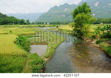 Vietnam - Rural Scene