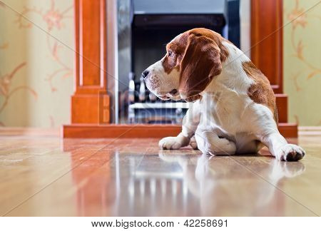 Dog On A Floor