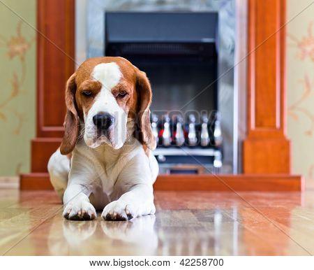 Dog On A Floor