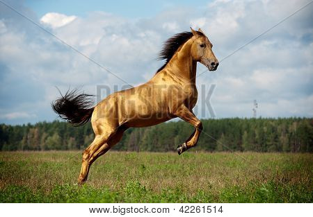 Golden Chestnut Horse In Action