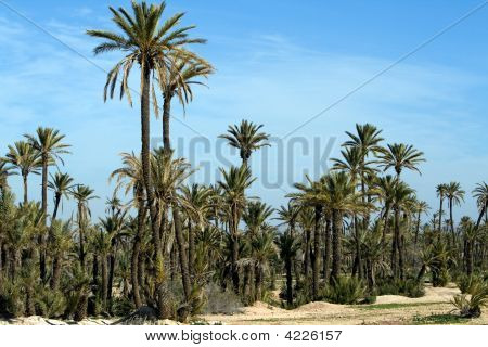 Landscape With Palm Trees