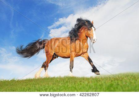 draft horse runs free