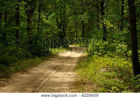 Trail Surrounded By Tall Green Trees