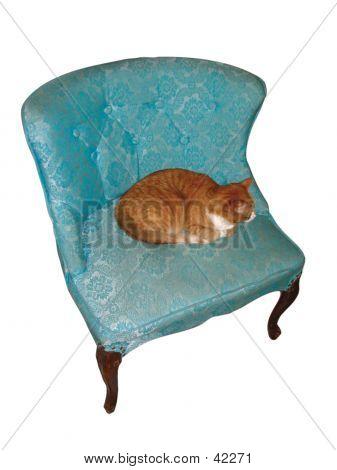 Cat In Blue Chair