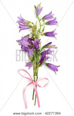 Bouquet from bell-flowers on a white background