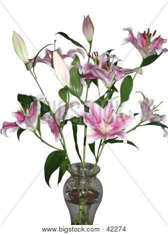 Stargazer Lilies On White