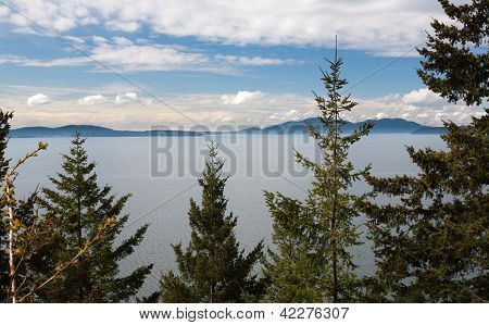 Trees, Mountains, And Puget Sound